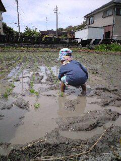 初めての田植え